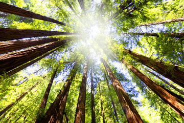 image d'illustration arbre